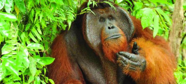 Abenteuer-Borneo